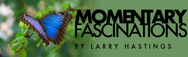Momentary Fascinations by Larry Hastings